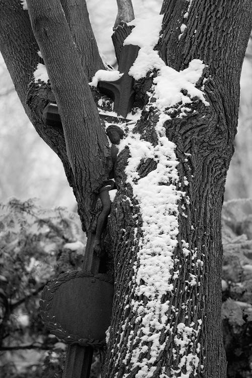 Krist ve stromě