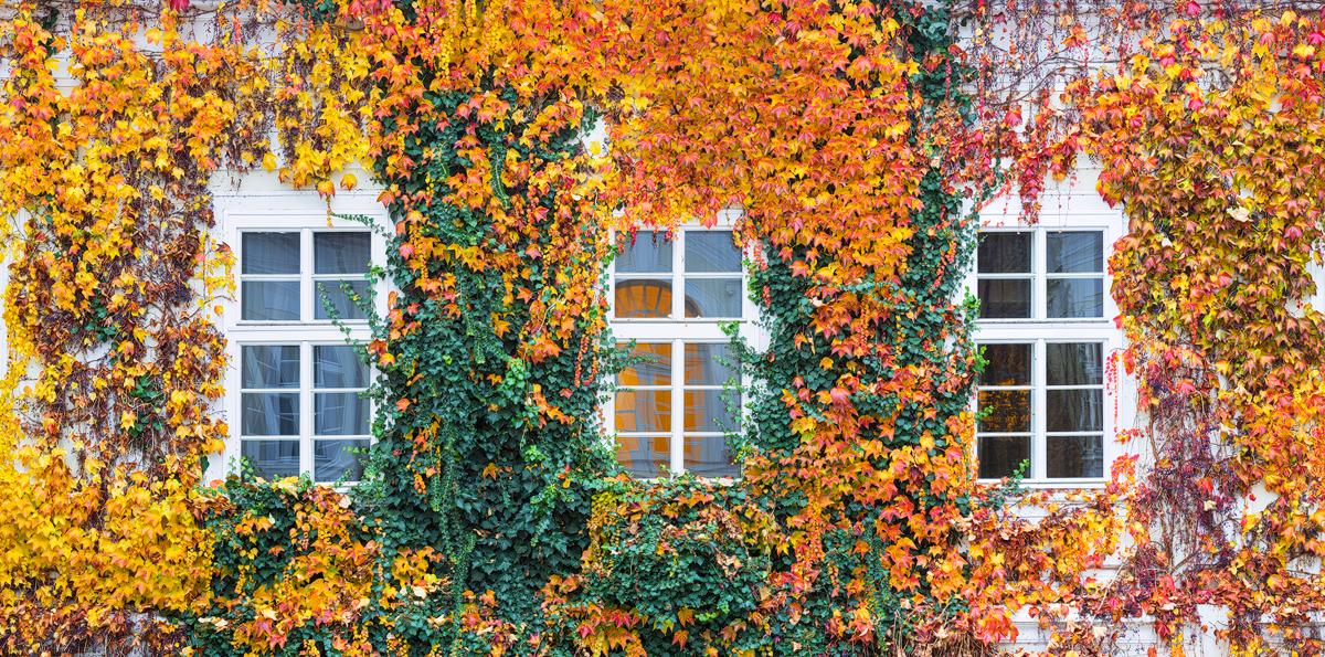 Podzimní okna