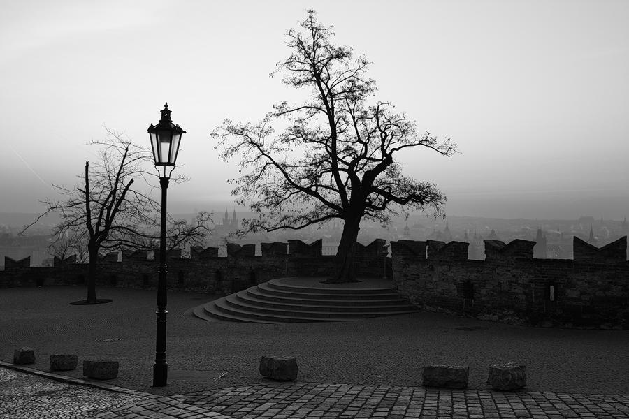 Strom u Černé věže