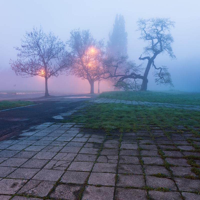 Stromy na Strahově